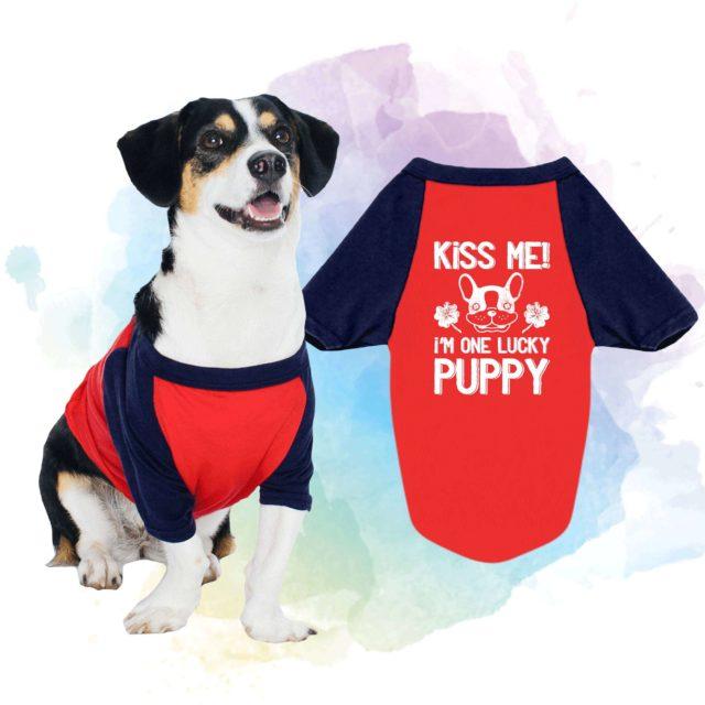 St. Patrick's Day Dog Shirt,Kiss Me I'm One Lucky Puppy, Raglan