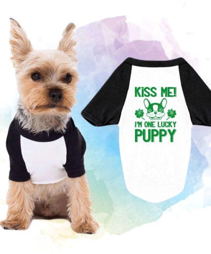 Dog Shirt, St. Patrick's Day Dog Shirt,Kiss Me I'm One Lucky Puppy, Raglan
