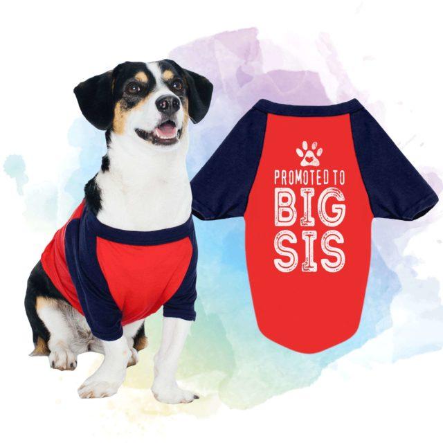 Promoted to Big Sis Dog Shirt, Promoted to Big Bro, Raglan, Dog Shirts